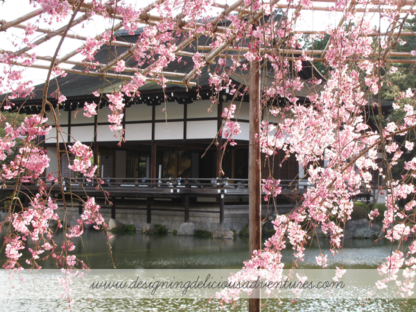 Cherry Blossoms Japan 4